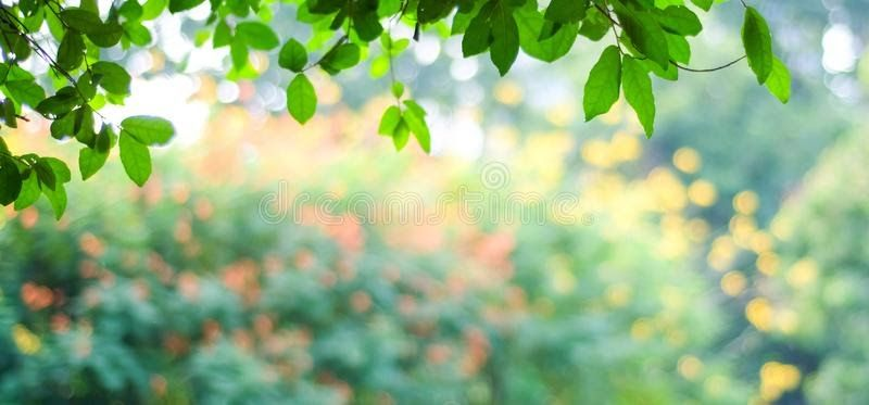 Blur Nature Tree Background Hd Nature Tree Nature Garden Green Nature