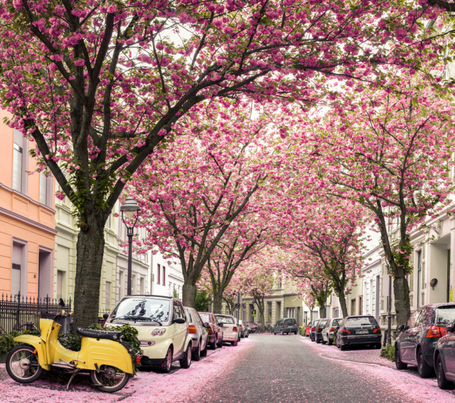 Spring Around The World 25 Fascinating Cherry Blossom Photos Beautiful Places Places Around The World Around The Worlds