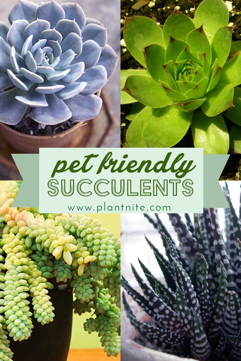 Check Out These Pet Friendly Nontoxic Succulents According To The Aspca That We Re Always Planting At Plant Safe House Plants Succulents Plants Pet Friendly