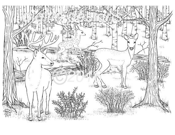 Kids Books On Coniferous Forest