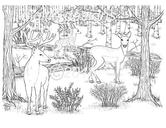 Erwachsenen Coloring Seite Hirsch Woodland Wald Rotwild In Den Dell