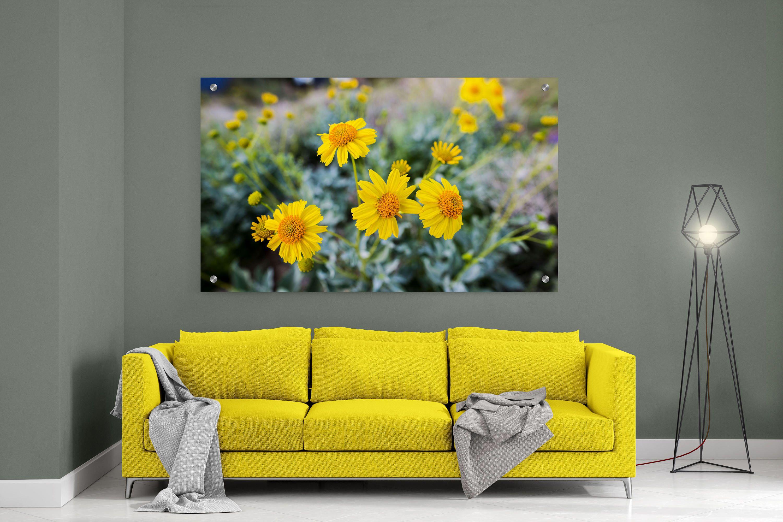 Metal Wall print, Yellow Flowers, Bloom field, Glass wall print ...