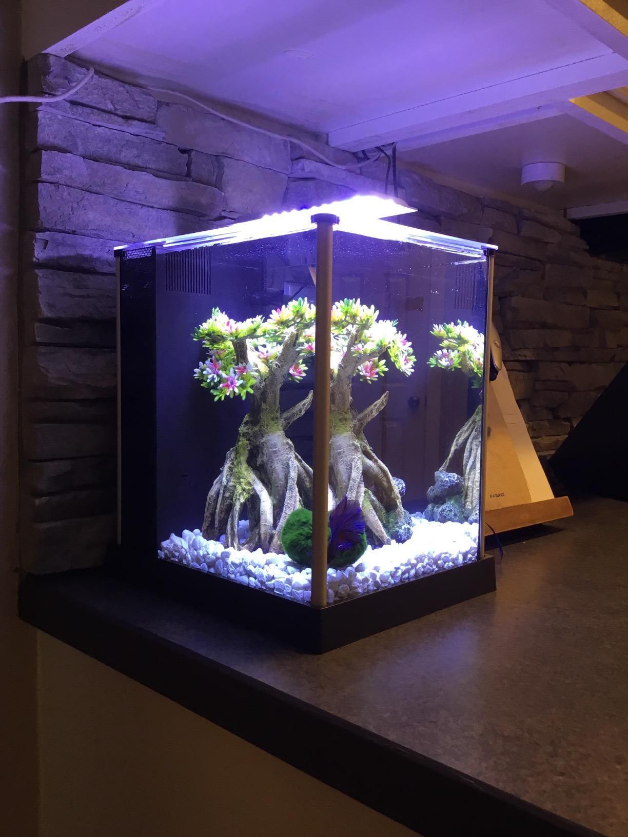 Fluval spec iii aquarium kit 26gallon