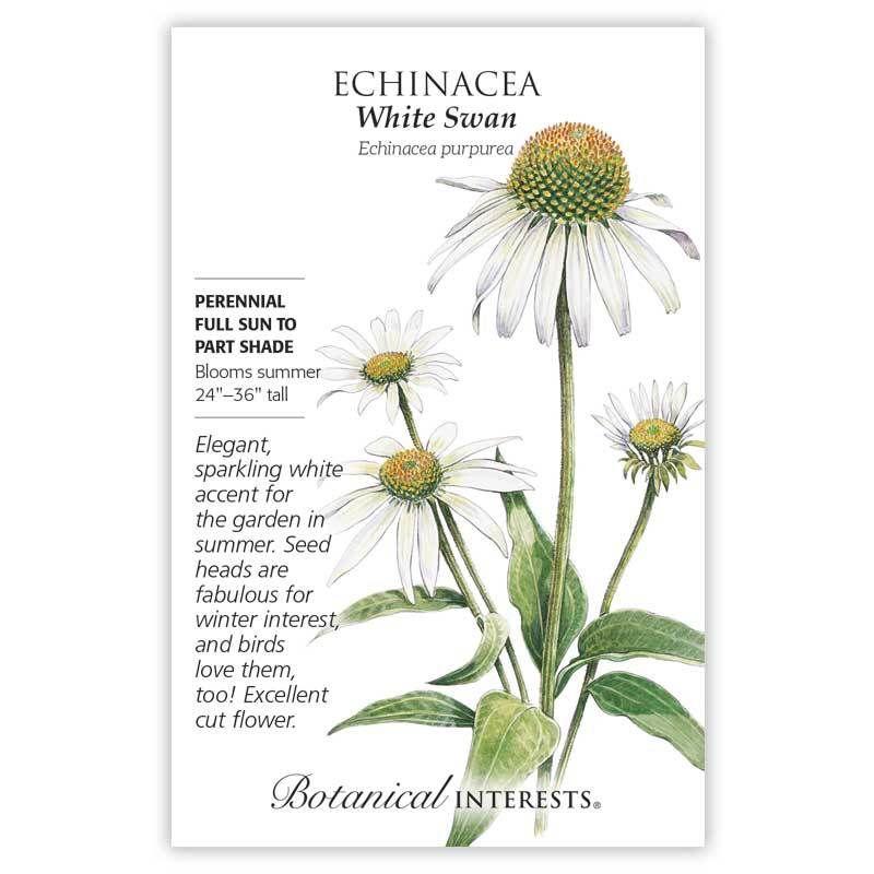 White Swan Echinacea Seeds In 2020 Echinacea White Swan Native Plant Gardening