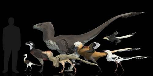 Totally random dromaeosaurids by Rainbowleo #prehistoriccreatures