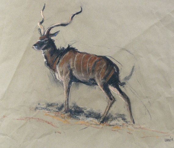 SALE Original mixed media sketch 'Kudu' by heatherirvinefineart, $60.00