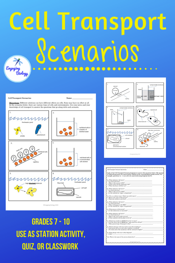 Cell Transport Scenarios Cell Transport Teaching Vocabulary Cell Processes
