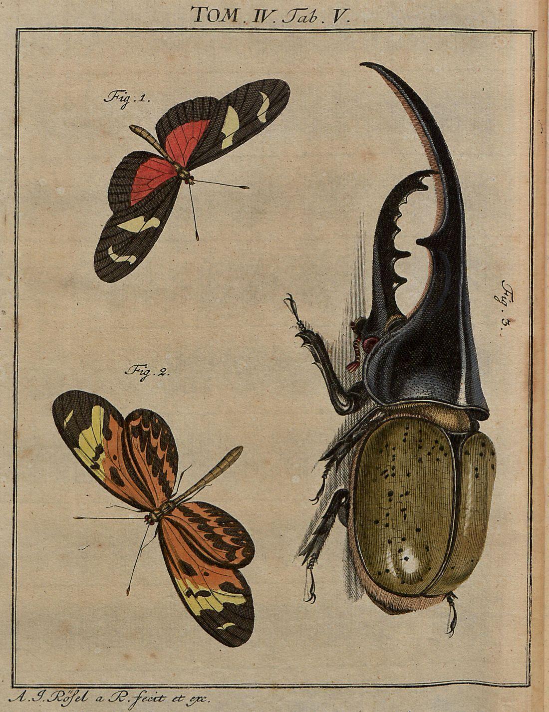 Helicoma spp + beetle V4 | Pinterest | Escarabajo, Hércules y Reino ...