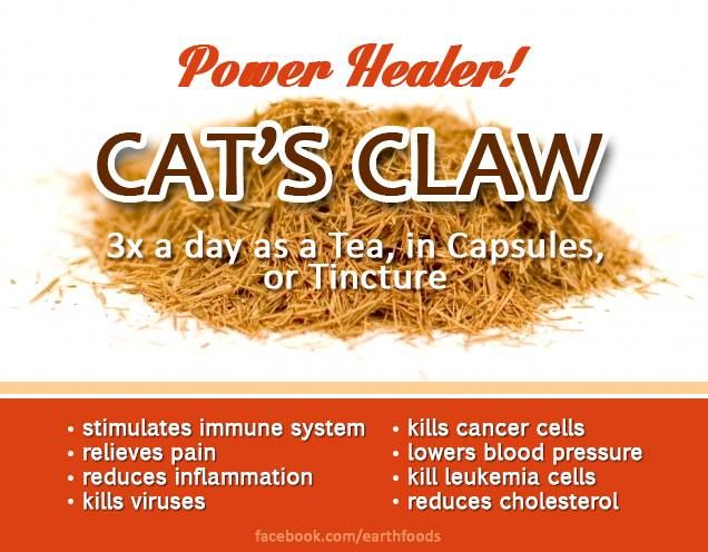 cats claw ~ power healer | herbs 4 well being ~ hierbas para el ...