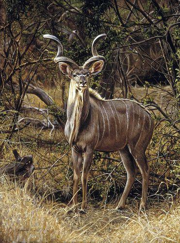 "Tony Karpinsk 'Kudu bull' oil on board 16¼"" x 12"