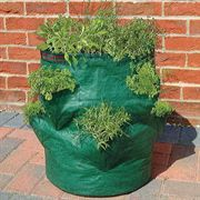 Bosmere Strawberry/Herb Growin Bag Accessories $12.95.