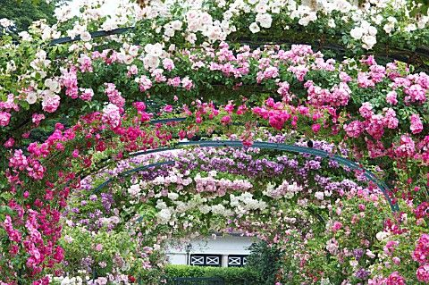 Roses on Archway in French Territories Roseraie of L'Hay-Les