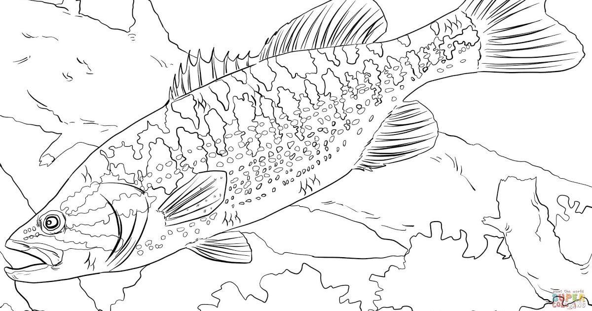 Coloring Download Freshwater Fish Coloring Pages Bass Fish Fish Color Pages Bass Fish Outline Bass Coloring Pag Fish Coloring Page Coloring Pages Fish Sketch