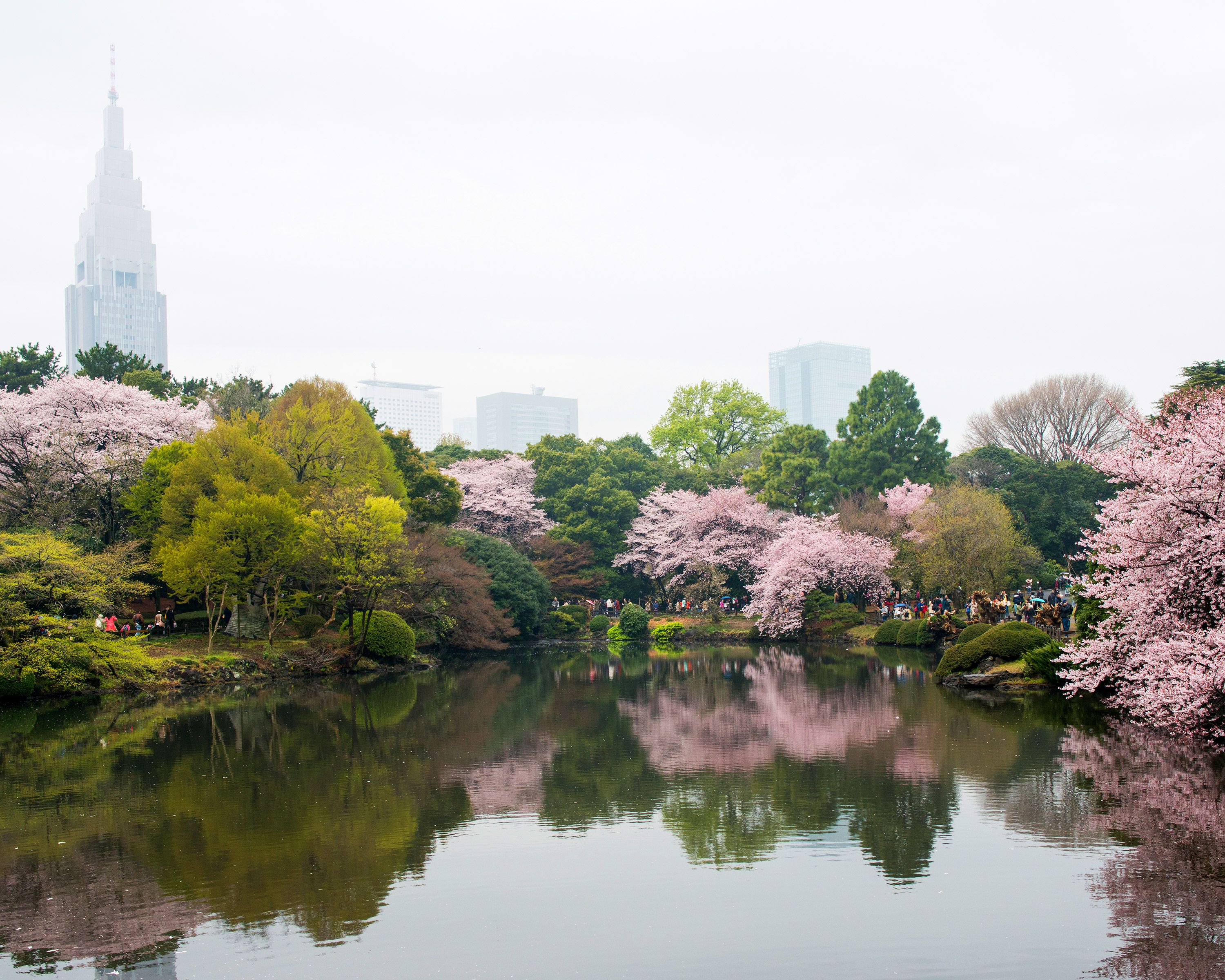 Embrace Spring With Pictures Of Japan S Cherry Blossoms Japan Travel Tokyo Holidays Cherry Blossom Japan
