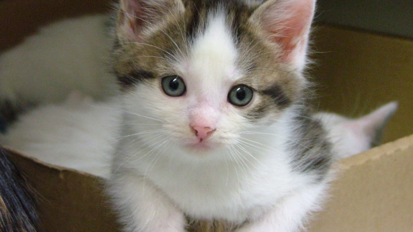 cute kittens & cats photos | free cat wallpaper cats wallpapers free