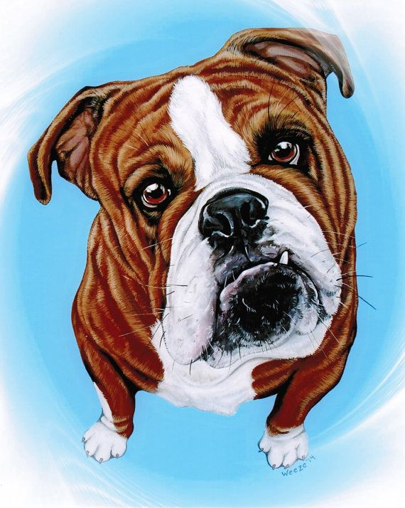 Bulldog - English Bulldog -  Bulldog Art - Bulldogs - Bulldog Print - Bulldog Painting - Pet Portrait - Dog Breeds - Dog Portrait