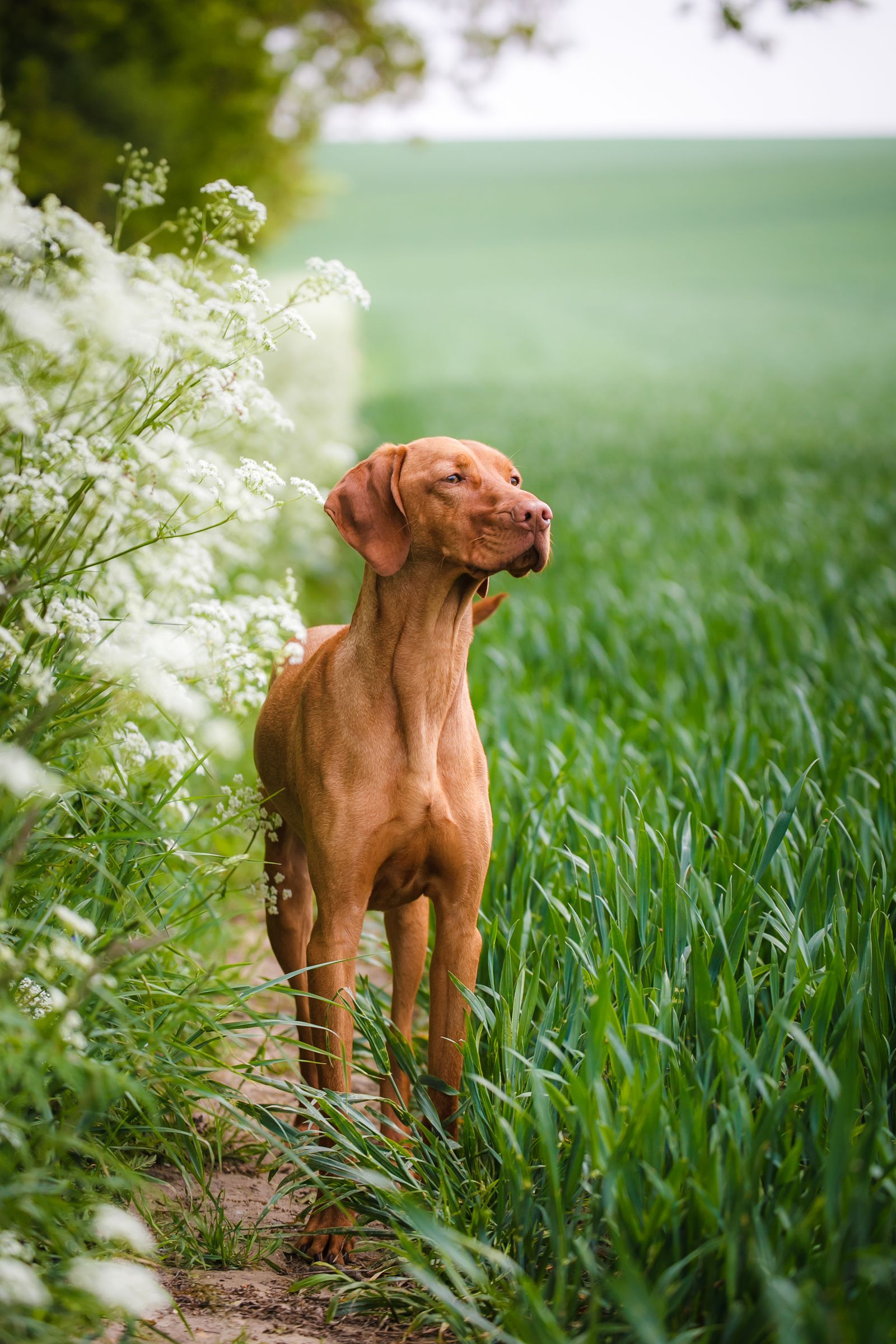 40 Medium Sized Dog Breeds That Are The Perfect First Pet For Any Family Best Dogs For Kids Sporting Dogs Breeds Family Dogs Breeds