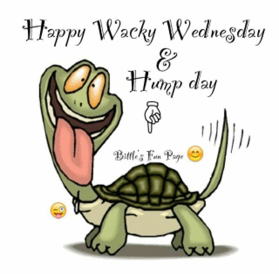 Wacky Wednesday | Happy wednesday quotes, Wednesday hump day ...