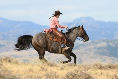 My wish list - Gronkle - for sale from Diamond McNabb Ranch.