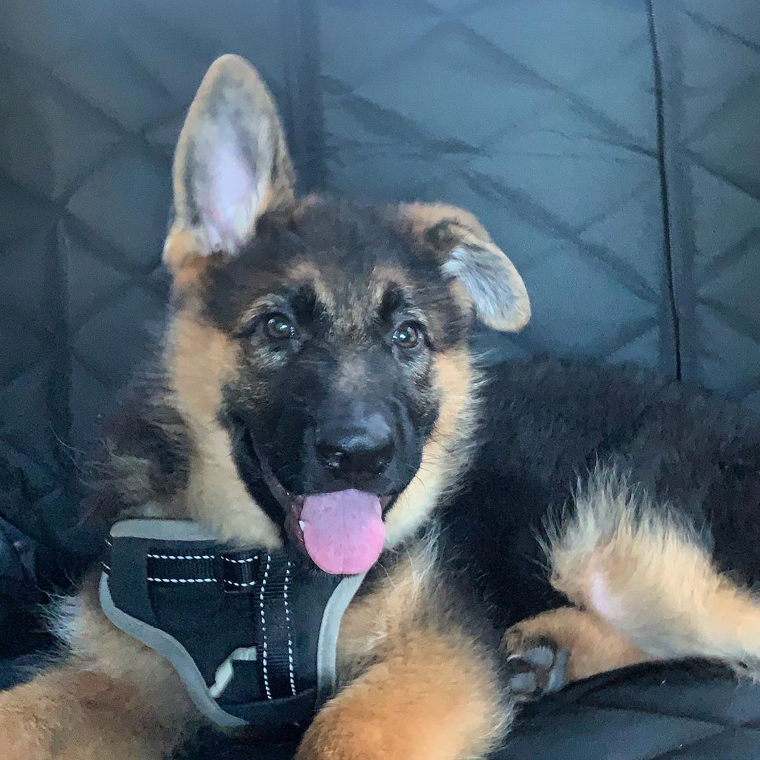 One Ear Up One To Go
