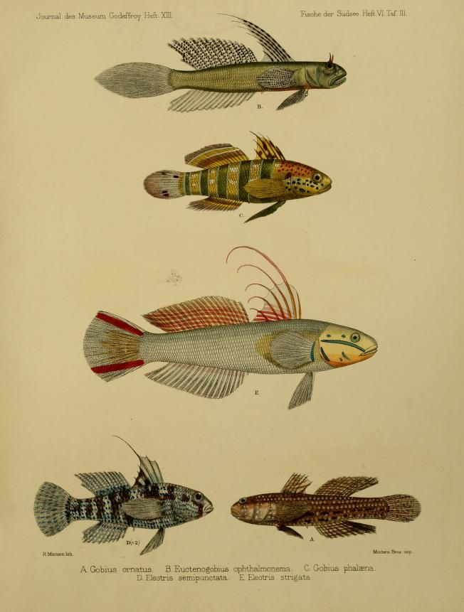 Journal des Museum Godeffroy, Vol IV, 1873-1910.