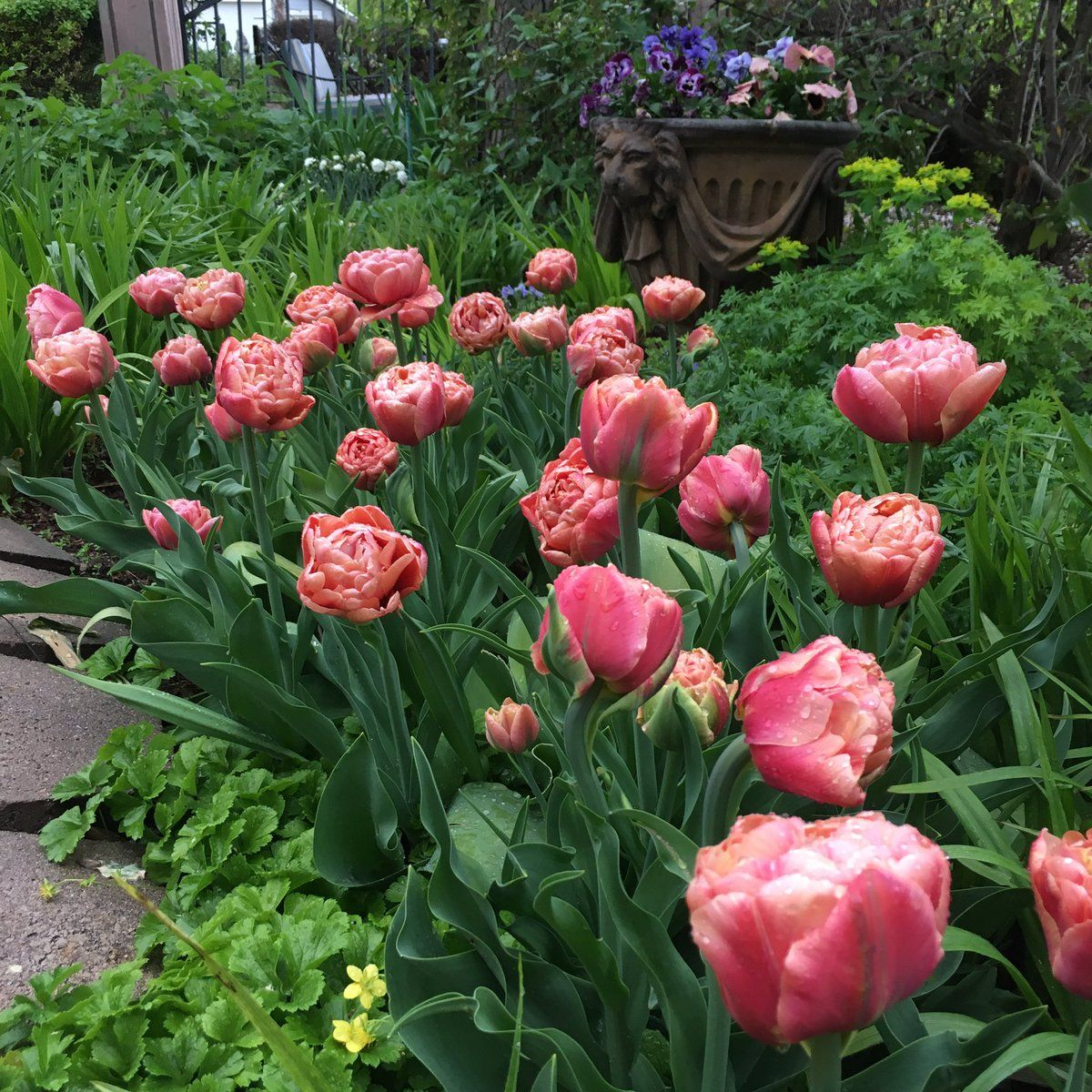 Laura Leboutillier Gardenanswer Twitter Garden Gorgeous