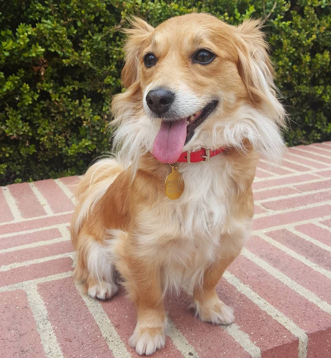 25 Adorable Dog Hybrids You Had No Idea Existed Pomeranian Mix