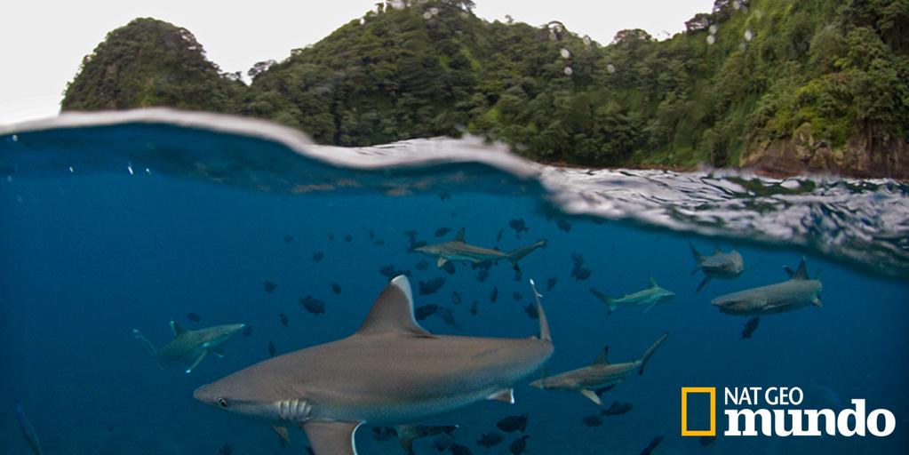 Síguenos en Instagram para ver las fotografías más increíbles del Mundo. http://instagram.com/natgeomundo
