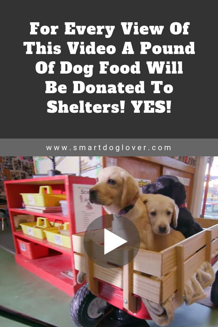 For every view of this video a pound of dog food will be