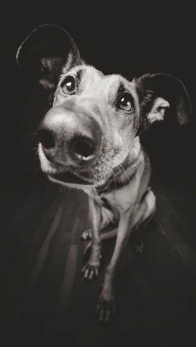 iPhone wallpaper dog