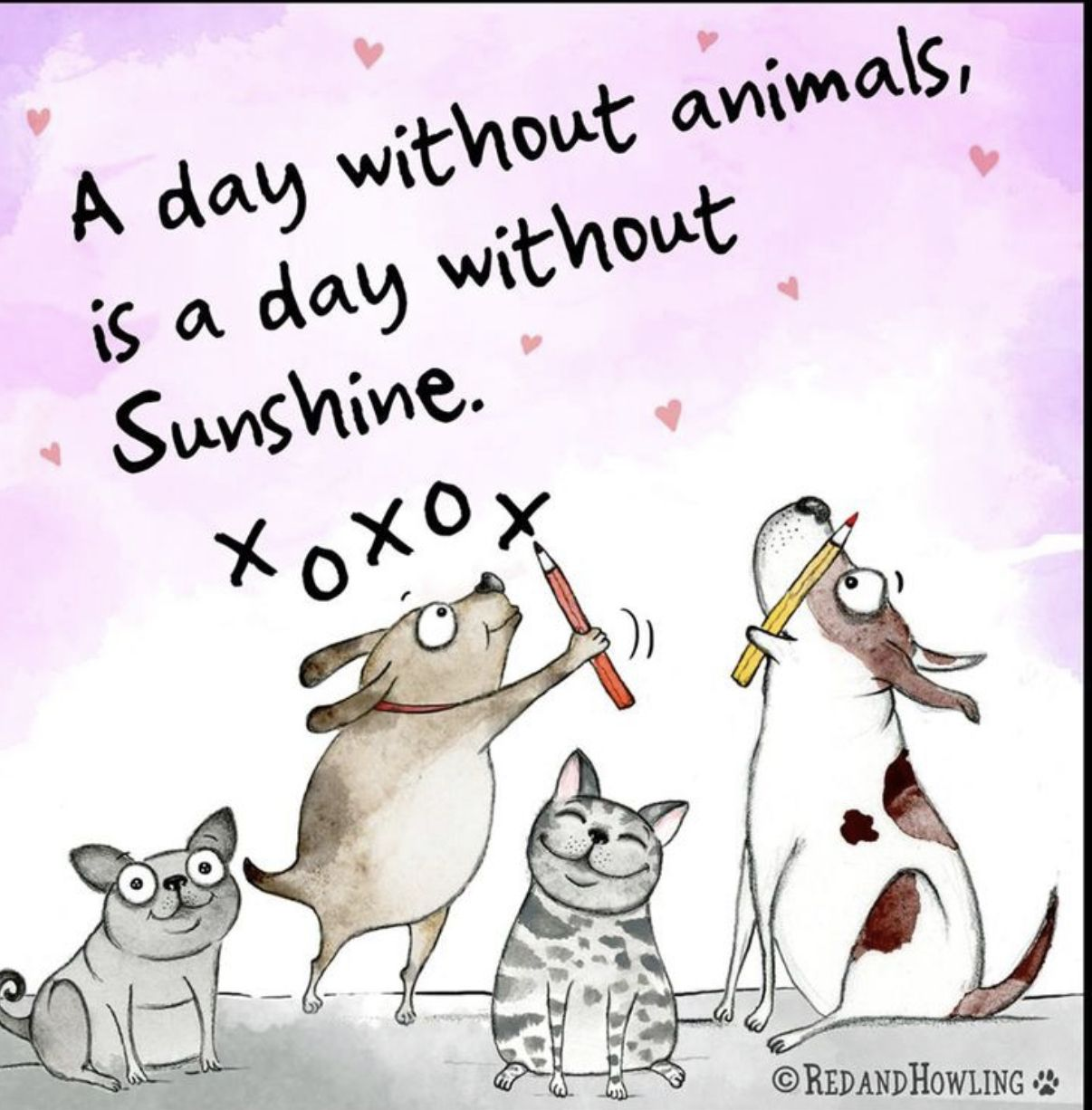 X o x o some of my favorites pinterest dogs animals and pets