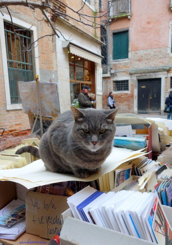 Piro un des chats de la librairie Acqua Alta Venise by VenetiaMicio