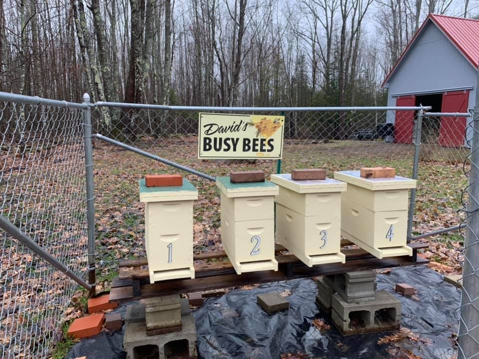 Is it Profitable to be a microbeekeeper? Bee keeping