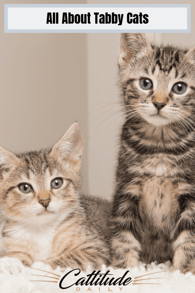Interesting Facts About Tabby Cats Tabby cat, Cats, Cat