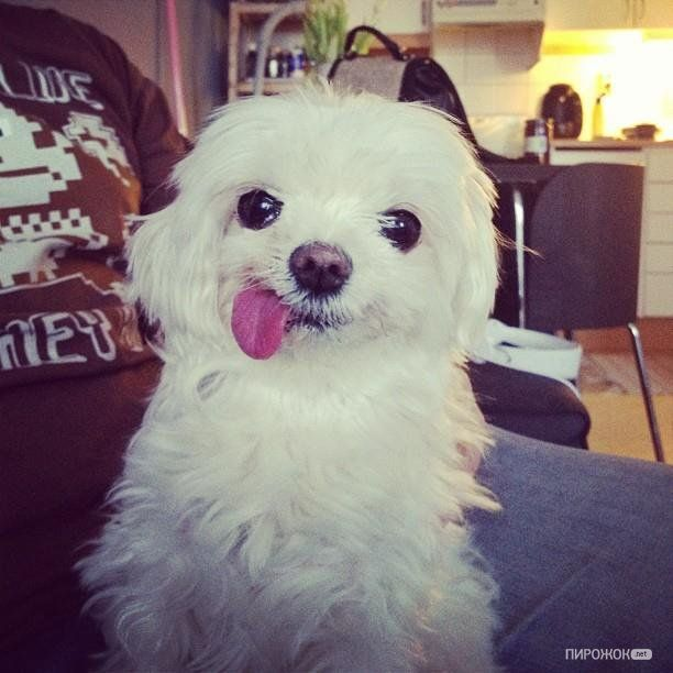 Funny Looking Dog Derp Dogs Cute Animals Cute Dogs
