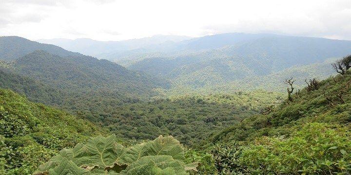 Monteverde Jungle, Costa Rica