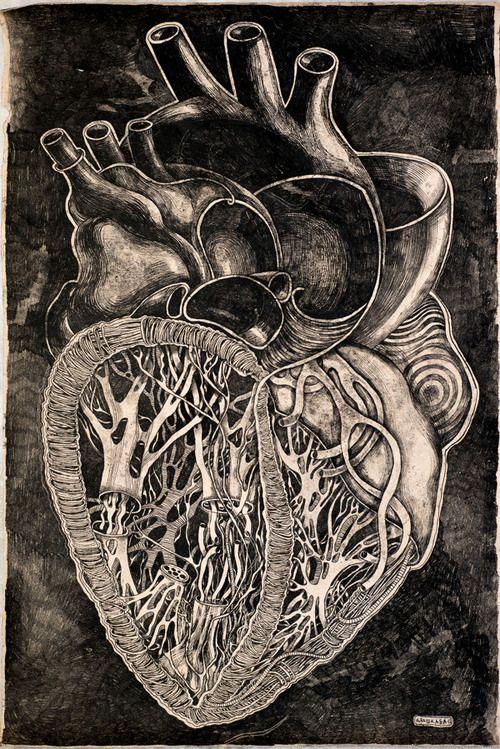Anatomy Heart\