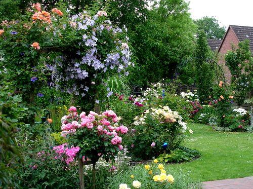 Rosenbogen - Frühling bis Herbst 2008 - Rosen und mehr - Mein - mein schoner garten vorgarten