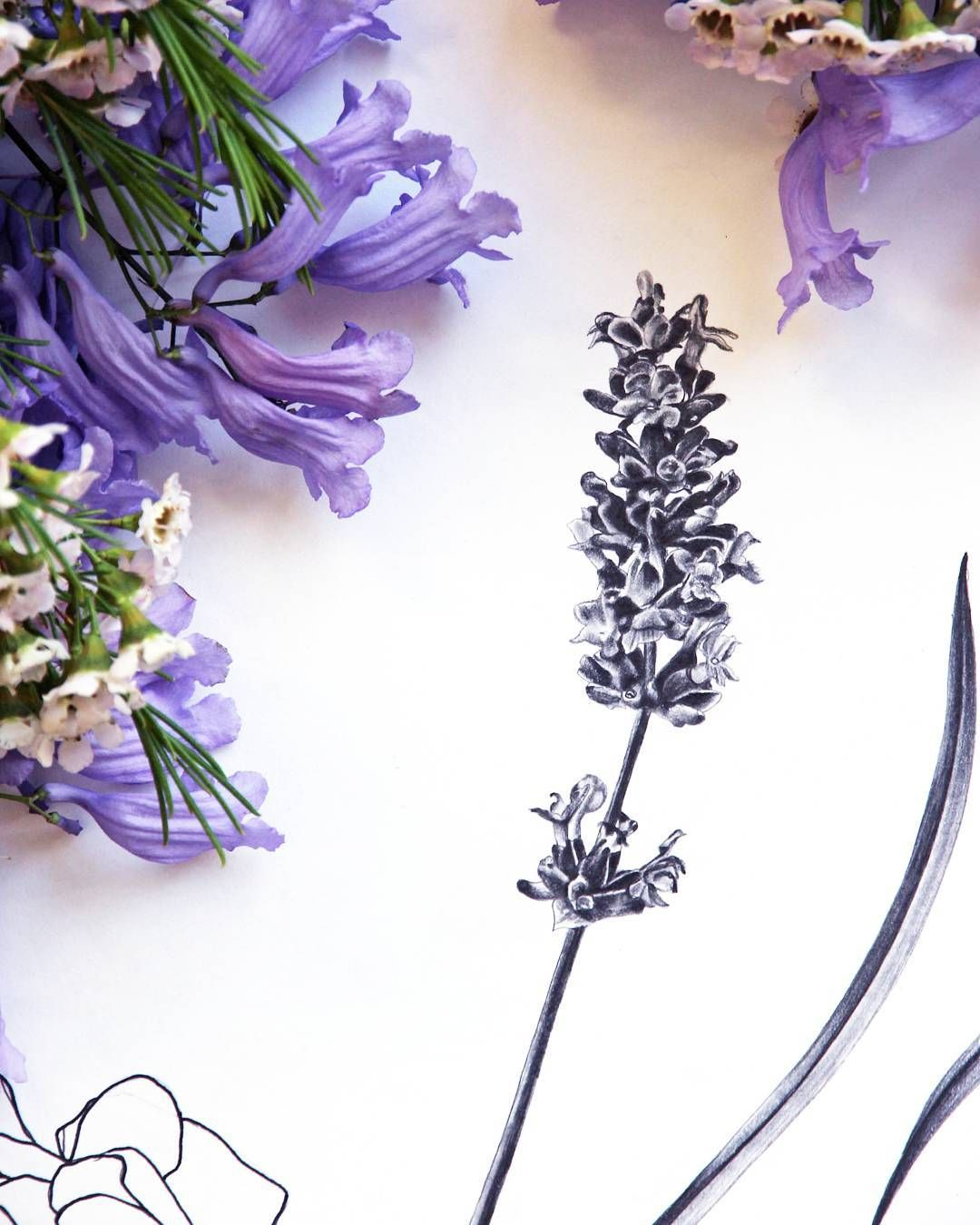Lavender sketch vanessavanderhaven flowers purple