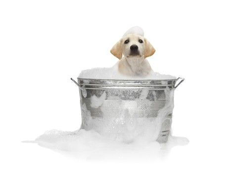 Puppy Taking Bath Photographic Print By Lew Robertson Dogs