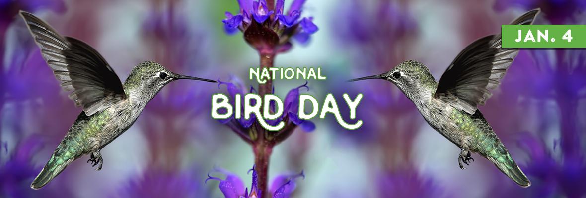 National Calendar 2022.National Bird Day January 5 2022 National Today National Calendar Bird National