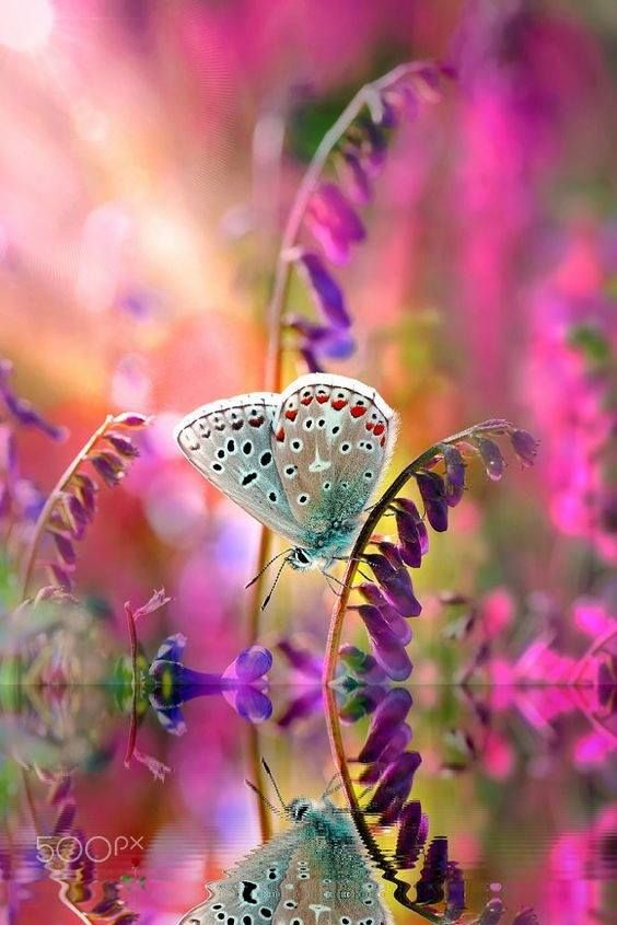 Nature Feelings Emotions Beautiful Butterflies Nature Animals Beautiful