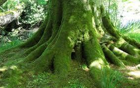 """Résultat de recherche d'images pour """"root tree"""""""