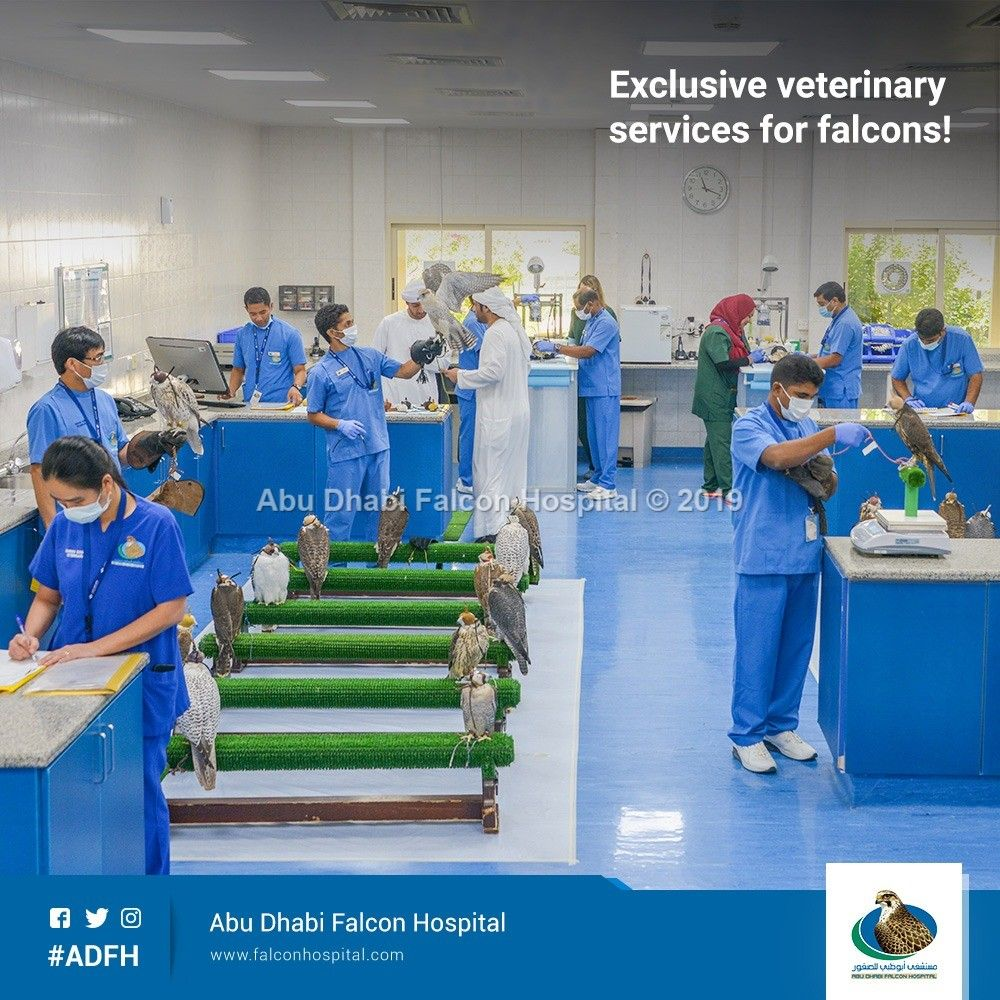 Adfh is the first public institution in the united arab