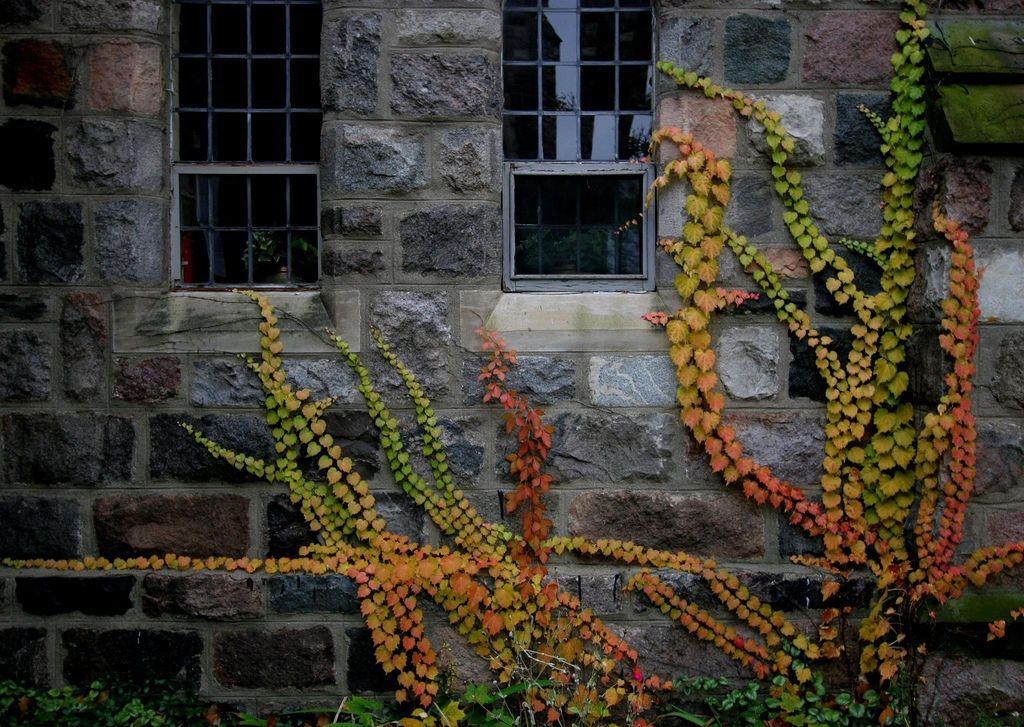 Fall Vines by Bill Couch on Flickr
