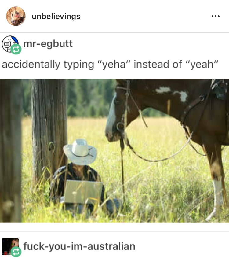 typing 'yeha' instead of 'yeah' Funny animals, Funny