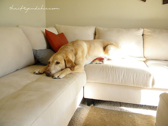 The Best Way To De Hair Your Couch Cleaning Pet Hair Cleaning