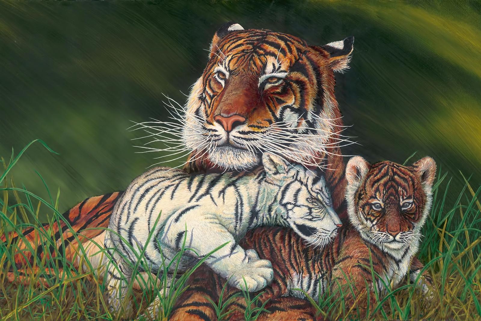 WhiteTiger0124.png 3600x2408x24(RGB) #white #tiger  #animal #endangered #predator #majestic