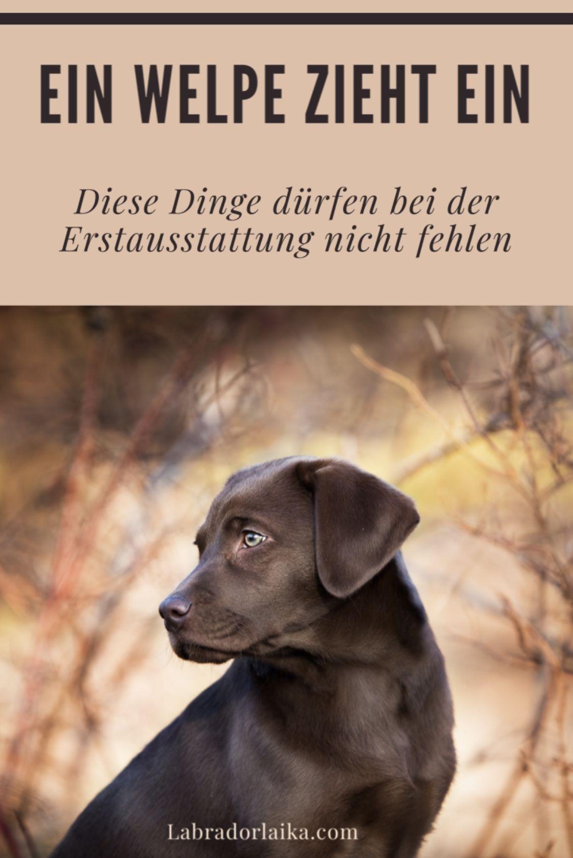 Erstausstattung Fur Einen Welpen Welpen Hunde Und Chihuahua Welpen