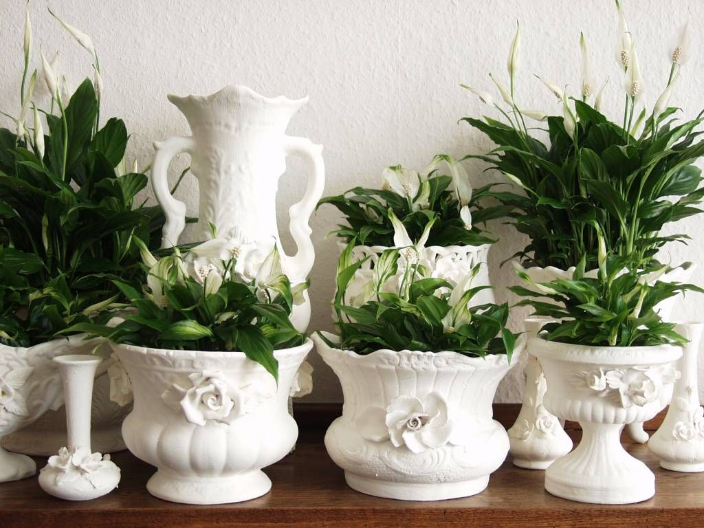 Spaths in creamware cachepots...gorgeous.